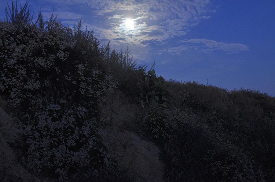 Serina Brinderson_nightscapes_0409-(1)